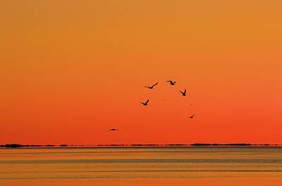Photograph - Ten Birds Flying  by Lyle Crump