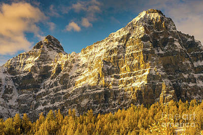Photograph - Ten Peaks Mount Tuzo And Golden Larch Valley Larches At Sunrise by Mike Reid