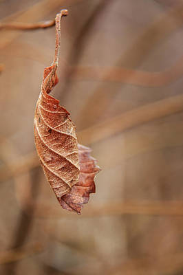 Photograph - Tenacious Leaf by Joni Eskridge