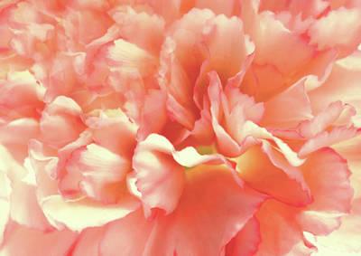 Digital Art - Tender Carnation by Georgiana Romanovna
