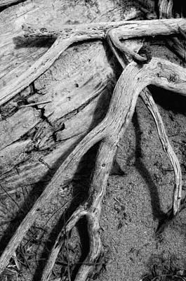 Photograph - Tender Death by Donna Blackhall