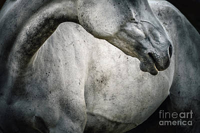 Photograph - Tender Portrait Of White Horse Head Close Up by Dimitar Hristov