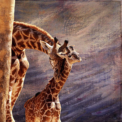 Photograph - Tenderness by Judy Vincent