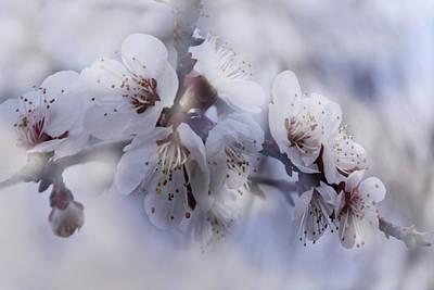 Tenderness Of Spring Art Print by Margarita Buslaeva