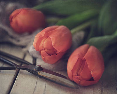 Photograph - Tending The Tulips by Teresa Wilson