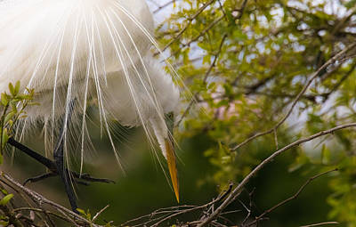 Photograph - Tending To The Nest by Kelly Marquardt