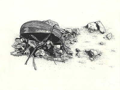 Drawing - Darkling Beetle by Marcus England