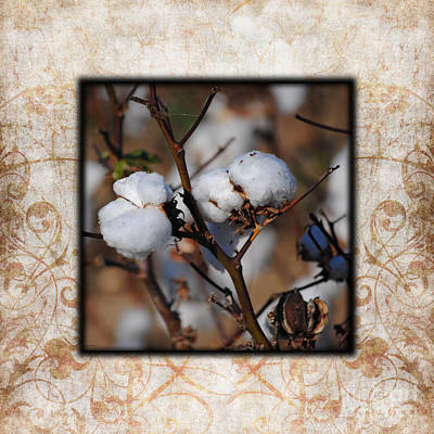 Tennessee Cotton II Photo Square Print by Jai Johnson