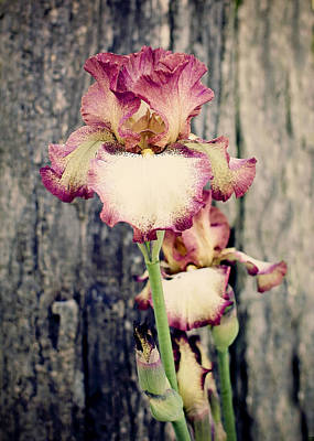 Photograph - Tennessee Iris by Heather Applegate