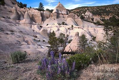 Photograph - Tent Canyon Flowers by Adam Jewell