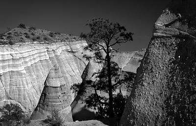 Tent Rocks And Tree Art Print by Jane Selverstone