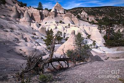 Photograph - Tent Rocks In The Forest by Adam Jewell