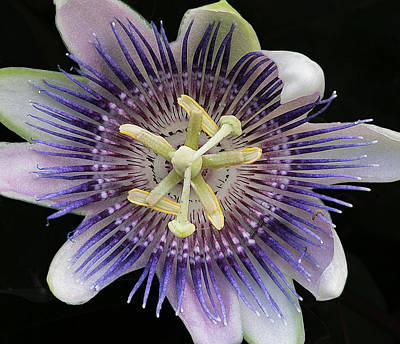 Photograph - Tentacle Flower by Bill Jordan