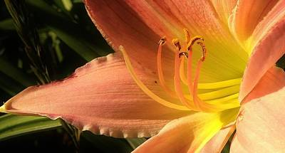 Photograph - Tequila Sunrise Lily by Bruce Bley