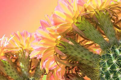 Tequila Sunrise Art Print by Veronika Countryman