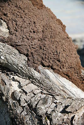 Termite Nest Print by Steve Madore