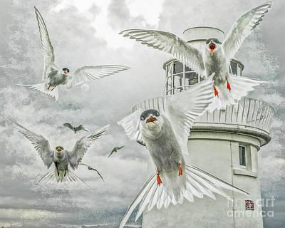 Tern Attack Art Print