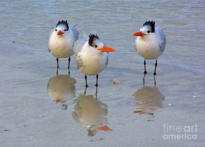 Photograph - Terns And Their Reflections by D Hackett