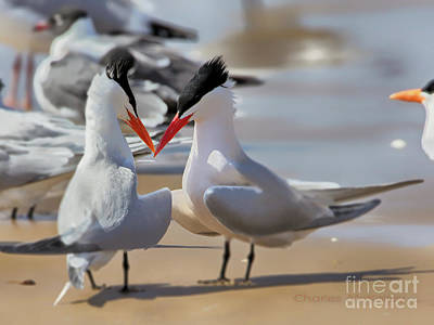 Photograph - Terns Head2head by Charles McKelroy