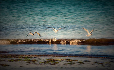 Pittsburgh According To Ron Magnes - Terns in Flight by Black Brook Photography