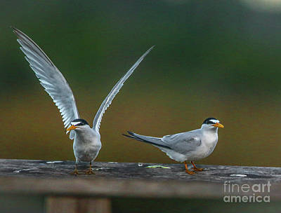 Photograph - Terns On Railing by Tom Claud