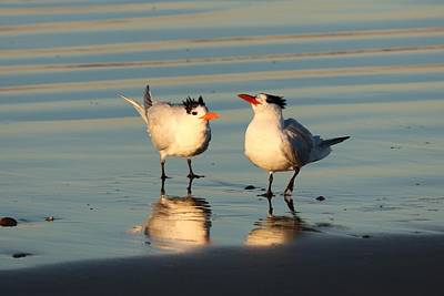 Photograph - Terns On The Beach  by Christy Pooschke