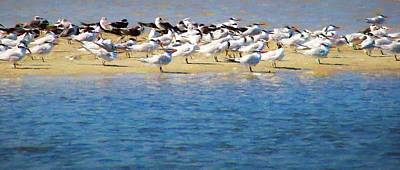 Photograph - Terns On The Island by Alice Gipson