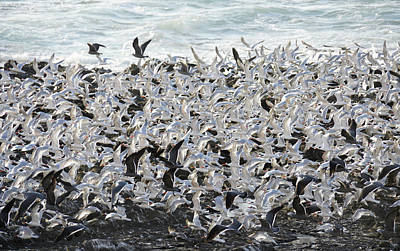 Photograph - Terns On The Wing by Michele Burgess