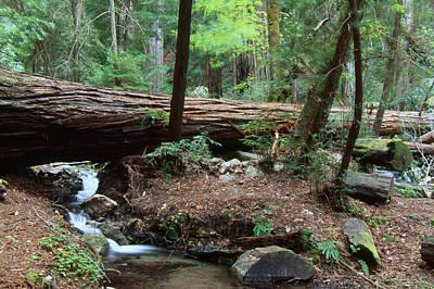 Terrace Creek - Ventana Wilderness Art Print by Soli Deo Gloria Wilderness And Wildlife Photography