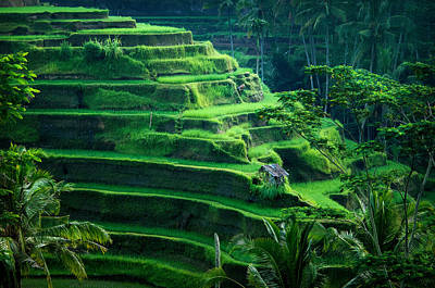 Lee Craker Royalty-Free and Rights-Managed Images - Terraced Rice Fields by Lee Craker