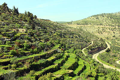 Photograph - Terraces by Munir Alawi
