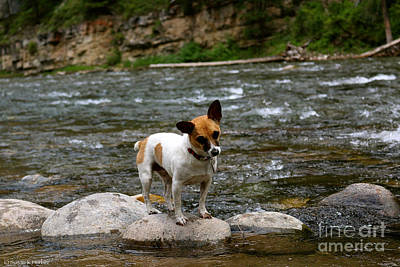 Photograph - Terrier Fishing by Susan Herber