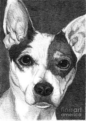 Dog Close-up Drawing - Buddy by Faithful Faces Pet Portraits