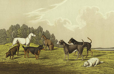Puppies Drawing - Terriers by Henry Thomas Alken