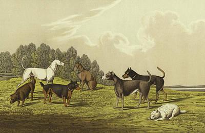 Terrier Drawing - Terriers by Henry Thomas Alken