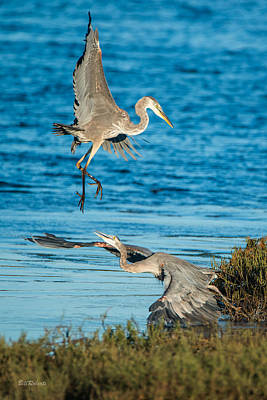 Moss Landing Photograph - Territorial Tiff  by Bill Roberts
