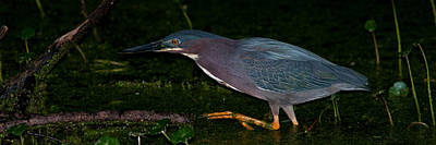 Heron Photograph - Terror Of The Swamp by Benjamin DeHaven