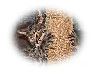 Photograph - Terrorizing The Scratching Post by Debbie Stahre