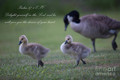 Photograph - Psalm 37 by Dale Powell