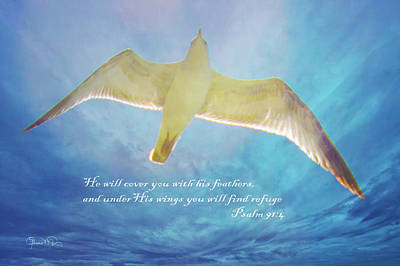 Photograph - Under His Wings 3 by Susan Molnar