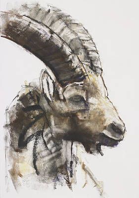 Mountain Goat Painting - Testa by Mark Adlington