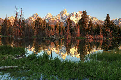Photograph - Teton Beaver Pond Reflection. by Johnny Adolphson