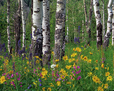 Floral Photograph - Teton Forest Spring by Leland D Howard
