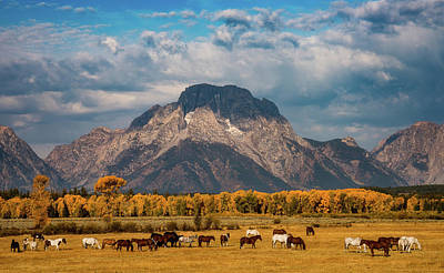 Teton Photograph - Teton Horse Ranch by Darren White