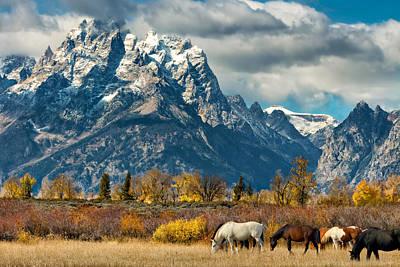 Photograph - Teton Horses by Kathleen Bishop