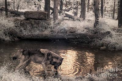 Teton Digital Art - Teton Imbibes by William Fields