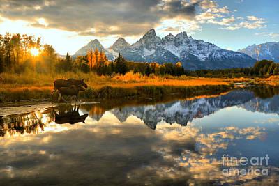 Photograph - Teton Moose Sunset Stroll by Adam Jewell