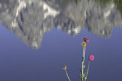 Photograph - Teton Reflections by Elizabeth Eldridge