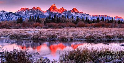 Photograph - Teton Reflections In The Frosted Willows by Adam Jewell