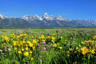 Wildflowers Photograph - Teton Valley Spring by Greg Norrell